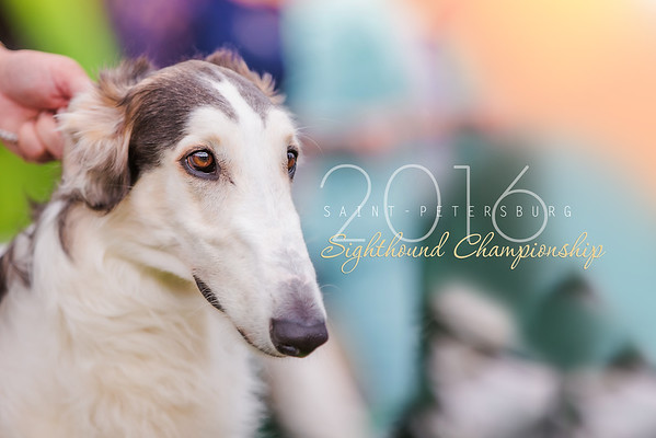 Russian Sighthound Championship Show 2016 St-Petrsburg