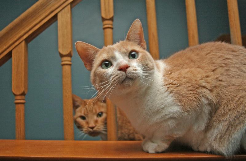 cats 058.jpg