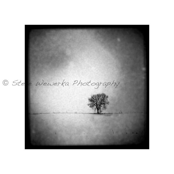 Solo Tree.jpg
