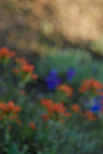 wildflowers070709-KateThomasKeown_DSC0138.jpg
