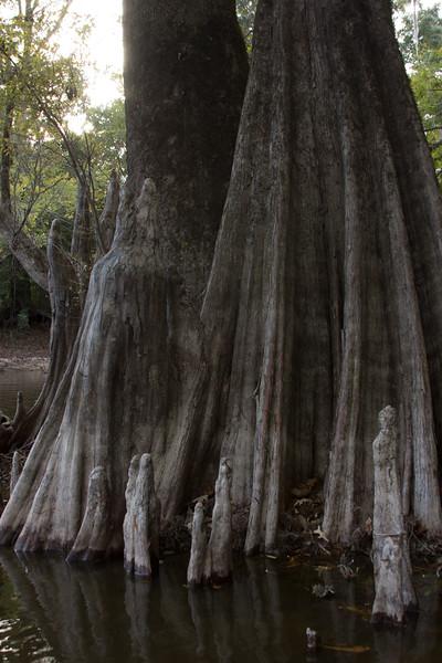 161018,Swamp tour New Orleans - 84.jpg