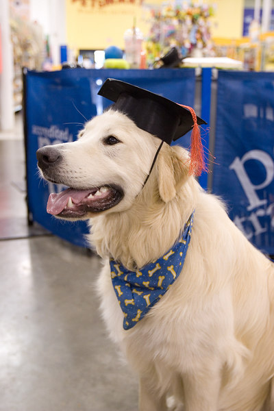 Intermediate Obedience Training - Test & Graduation