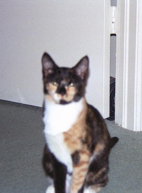 2003 12 - Cats 43.jpg