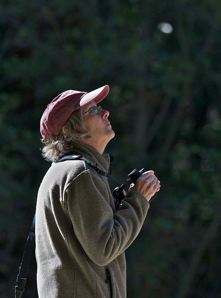 Jenny Birdwatching, Sequoia National Park, California
