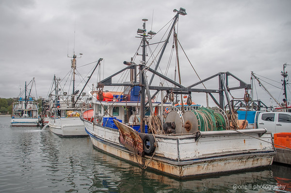 Fishmarkets SHBT