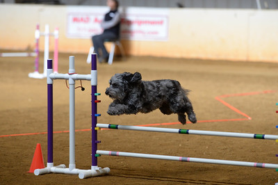 Delaware County Kennel Club AKC Agility Trial March 5-6