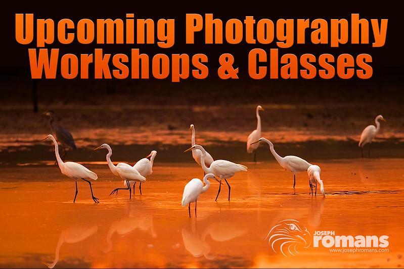 Workshops & Classes.jpg
