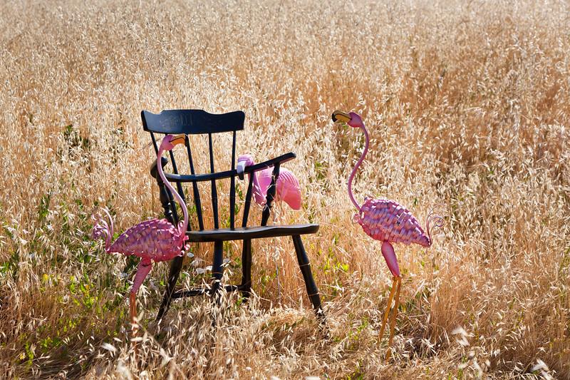 chair8.jpg