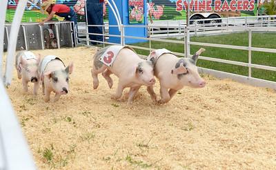 DuPage County Fair