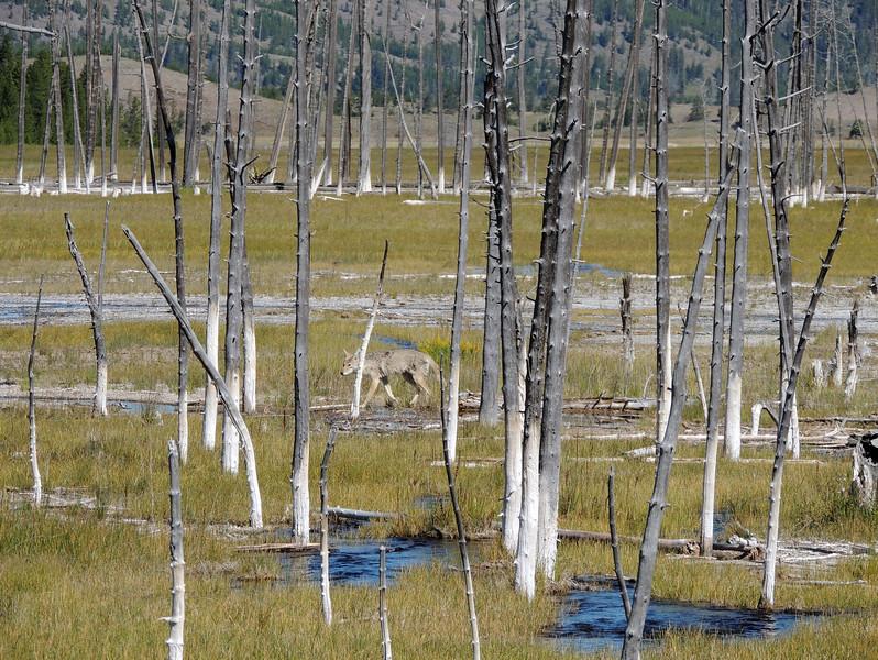 Yellowstone (20).jpg