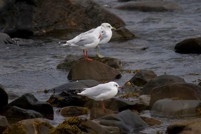 Scotland Birds 2011