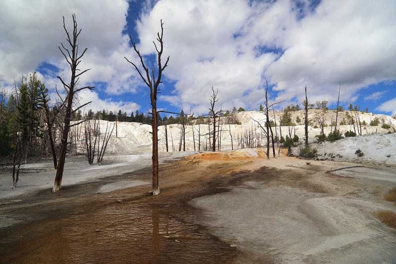 Yellowstone 115.JPG
