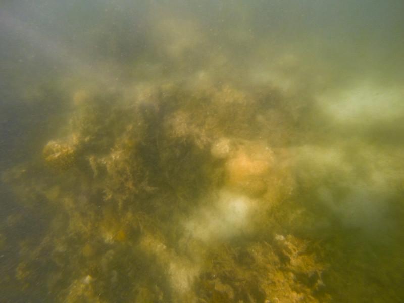 Dive in El Nido Series 3 Photograph 22