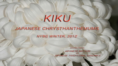 KIKU-2012 Japanese Chrysanthemums