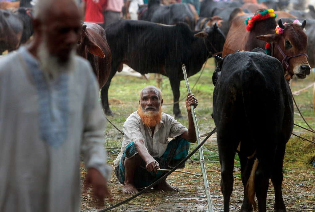 . A Bangladeshi man sits with his cattle at a market ahead of Eid al-Adha festival in Mymensingh, on the outskirts of Dhaka, Bangladesh, Tuesday, Oct. 15, 2013.  (AP Photo/A.M. Ahad)