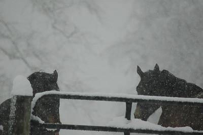 2 10 10 horses in snow