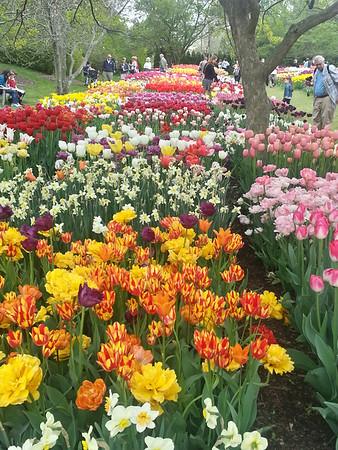 Longwood, Spring 2014