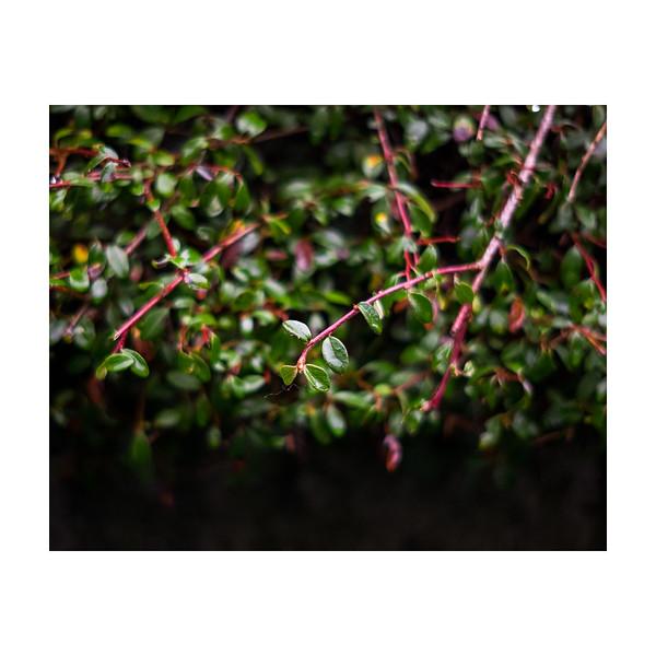 353_Bush_10x10.jpg