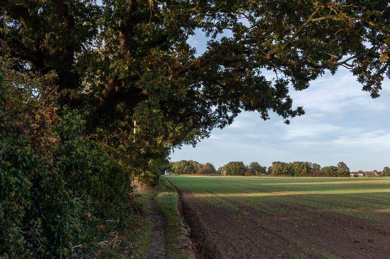 A Quiet Walk Through Reedham