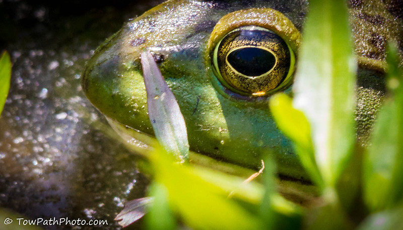 """""""Reflections in a Frogs Eye"""""""