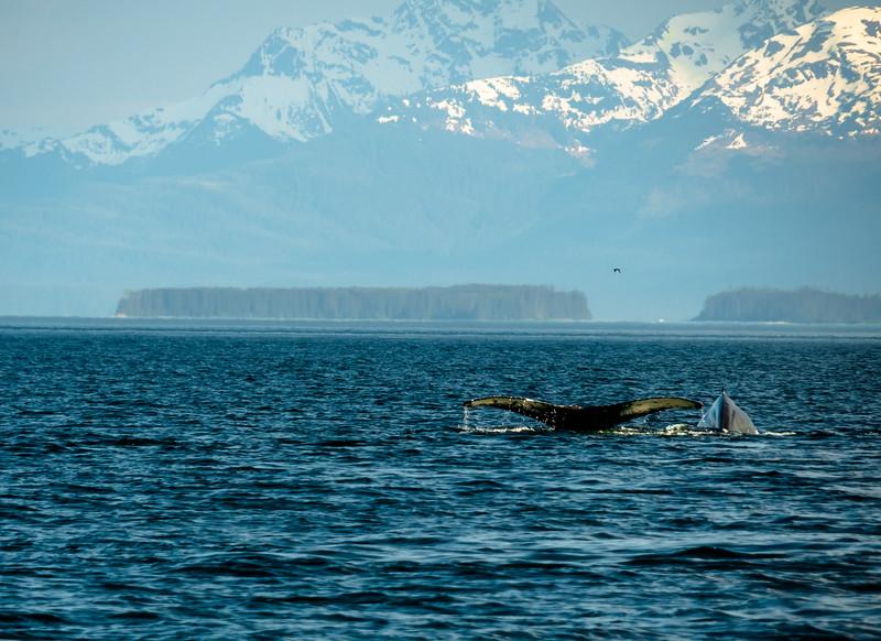 506 Humback whale and calf  (1 of 1).jpg