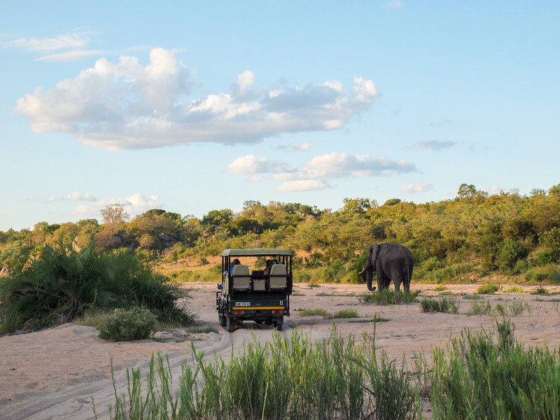 Safari in Kruger National Park