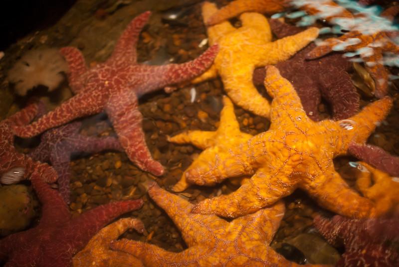 Seattle 201208 Aquarium (4).jpg