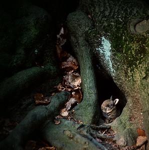 Rabbit hiding between roots