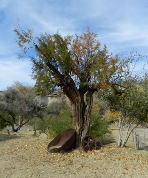 Tree old.jpg