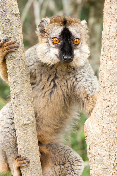 Madagascar_2013_IG3A2316.jpg