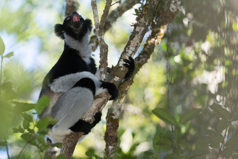 Madagascar_2013_FH0T9319.jpg