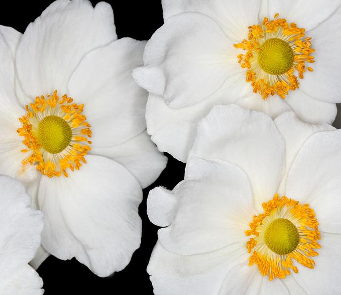 Three flowers smooth as silk_5150247235_o_8179027240_o.jpg