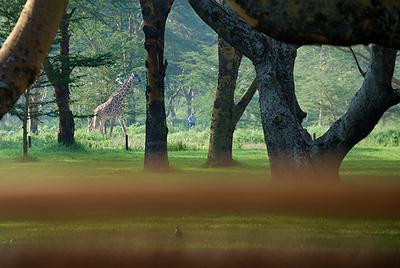 Naivasha Simba Lodge (83883452).jpg