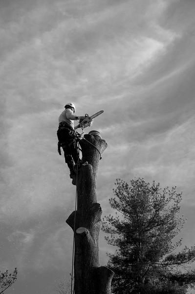 Tree climber_5457.jpg