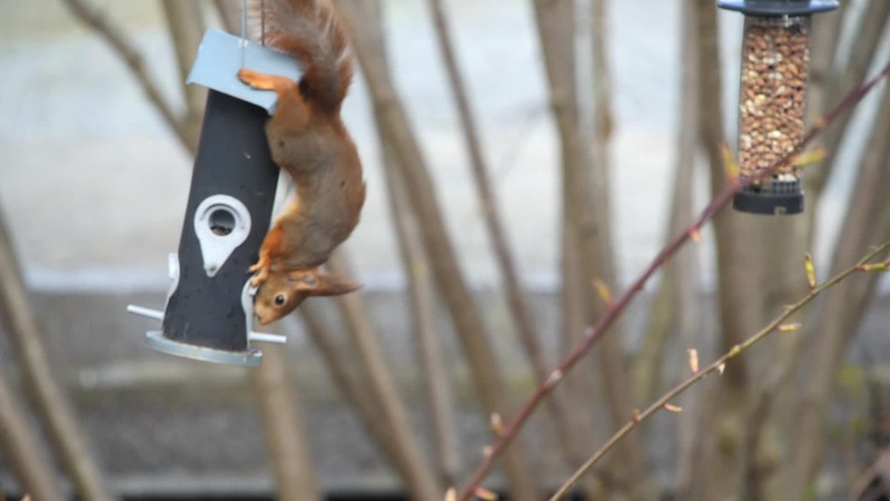 Eekhoorn.mov
