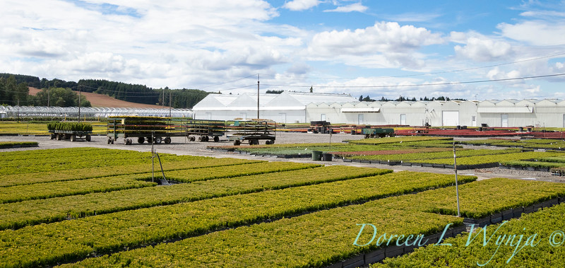 Dayton nursery - can yard shots_2178.jpg