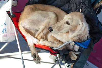 Dogshow_25-01-2014