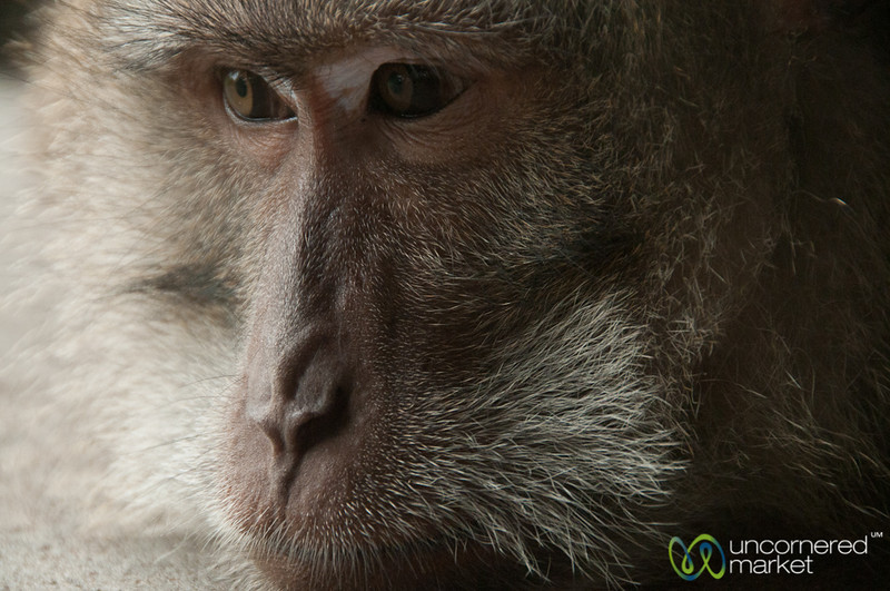 Monkey Close Up - Ubud, Bali