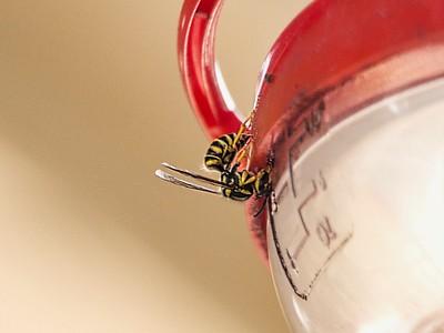 Wasp and Hummingbird