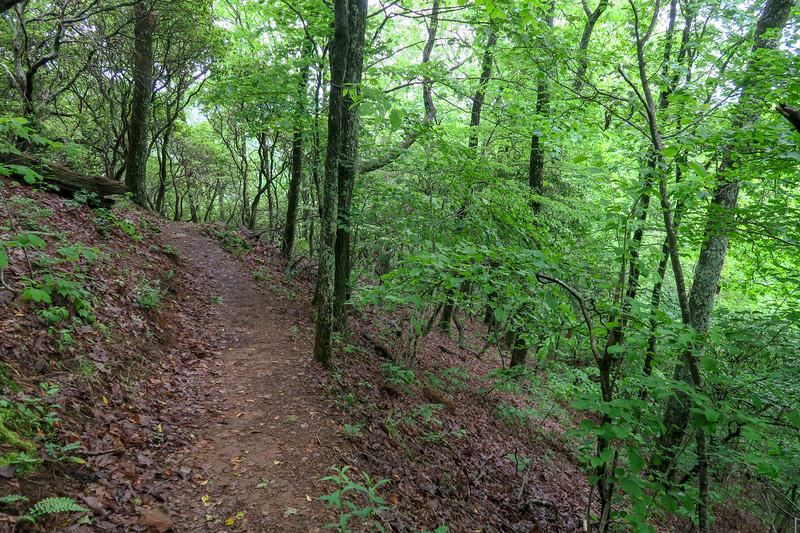Mountains-to-Sea Trail -- 3,000'