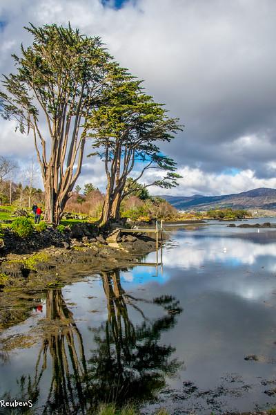 Trees reflection, Ireland.jpg