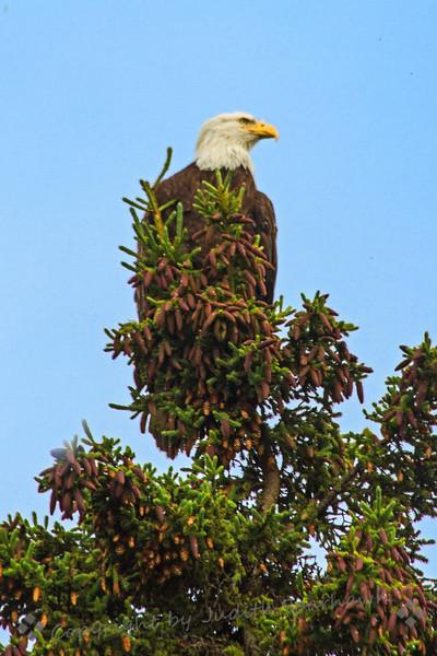 Eagle at Crooked Creek.jpg