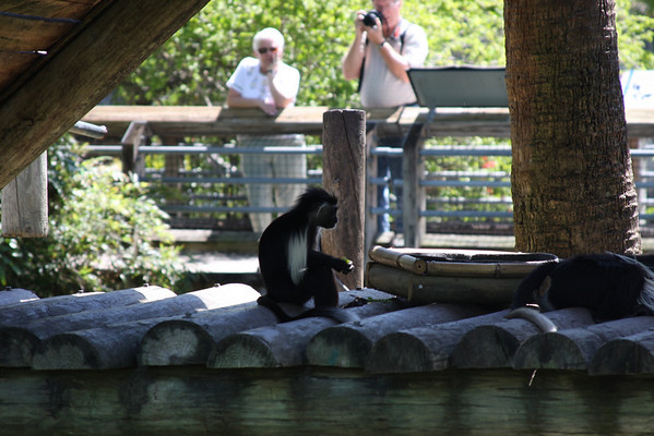 Lowrey Park Zoo