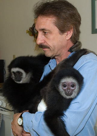 06-03 Gibbon Apes