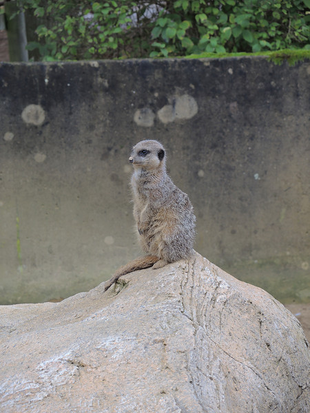 Cotswold Wildlife Park Nov 2013 083.JPG
