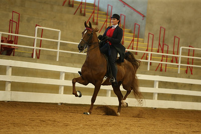 18. ASB Five-Gaited – Novice Horse