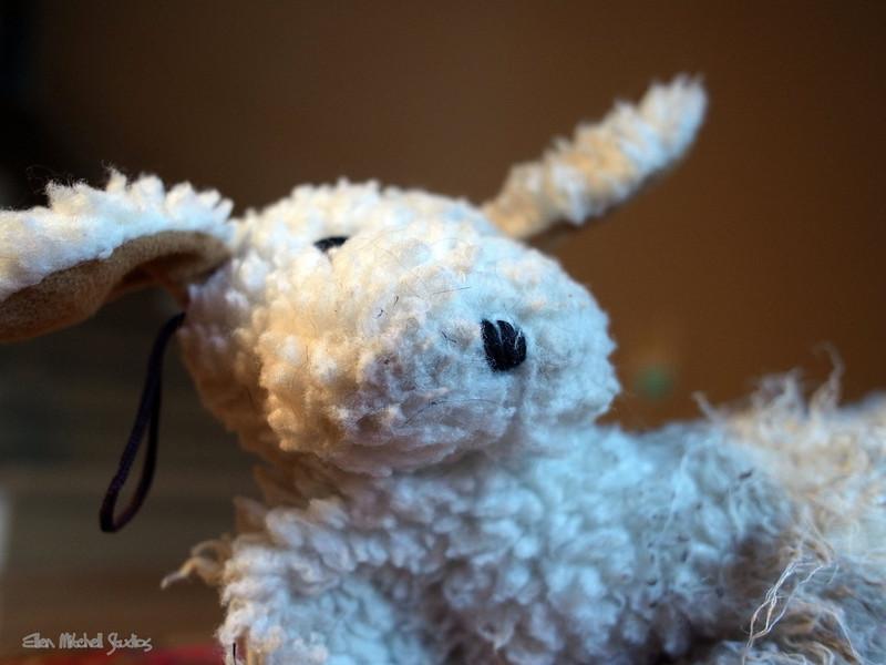 Mr. Rabbitt