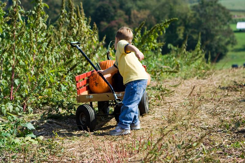 20081005_ramseys_farm_0032.jpg
