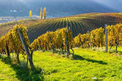 Golden vineyards at Zlati grič and sunset from Prihova - Nov 8, 2015