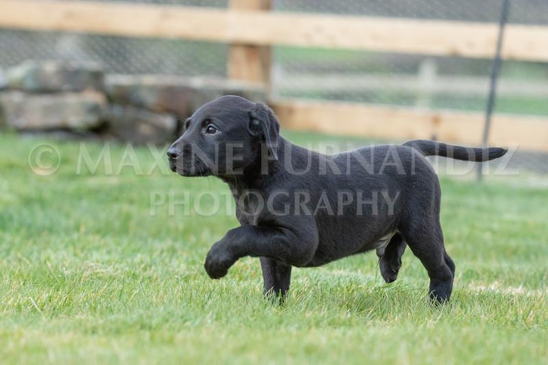 Weika Puppies 24 March 2019-6512.jpg